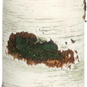 708 f10060 04 creme 000 sml 300x300 - 1 x große Weihnachtskerze Tannenbaum Höhe 220 mm